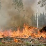 Slash burn and poison is not that effective and should not have a monopoly on cancer treatment